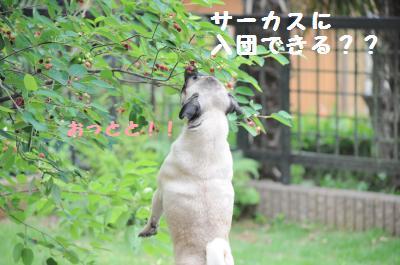 032_convert_20110610200750.jpg
