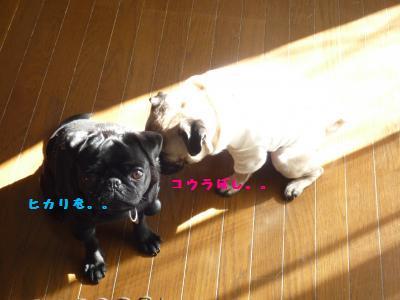 034_convert_20111213092313.jpg