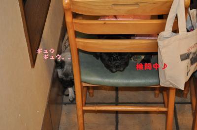 035_convert_20111122150605.jpg