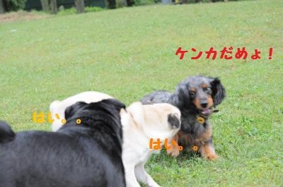 037_convert_20110921234405.jpg