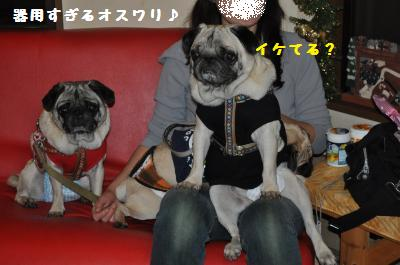 039_convert_20111122150857.jpg