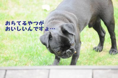 045_convert_20110610201057.jpg