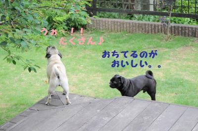 048_convert_20110610200856.jpg