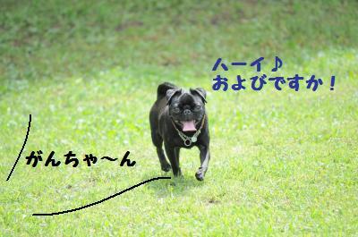 052_convert_20110921235354.jpg