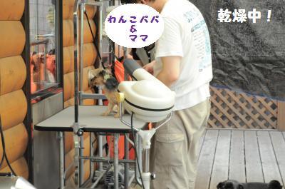 055_convert_20110627223441.jpg
