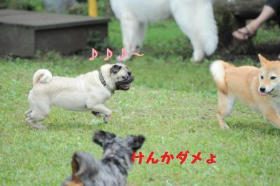 055_convert_20110922000030.jpg