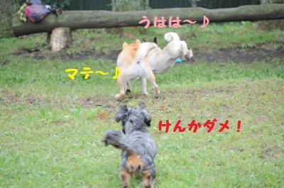 060_convert_20110922000209.jpg