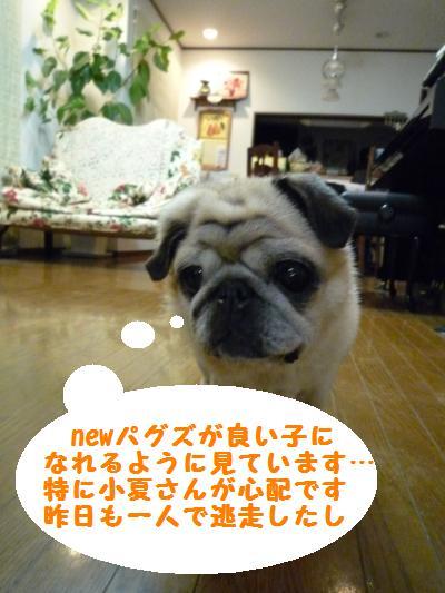 094_convert_20110326205947.jpg