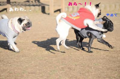 147_convert_20111230150314.jpg