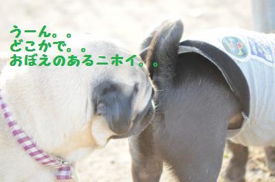 154_convert_20111005090439.jpg