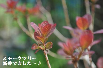 430somke tree