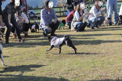 318_convert_20111125095012.jpg