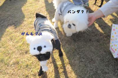 380_convert_20111125101819.jpg
