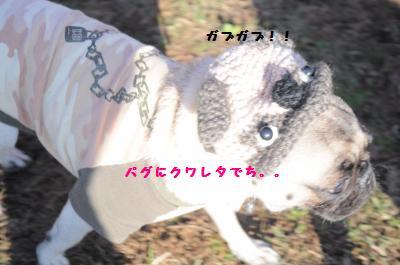 389_convert_20111125102138.jpg