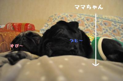 436_convert_20111128214235.jpg