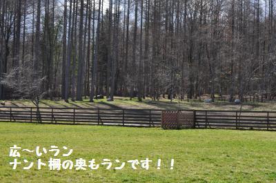 497_convert_20111128215308.jpg