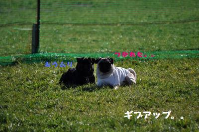 513_convert_20111128220428.jpg
