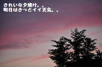 514yuuyake.jpg