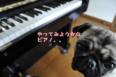pianokona.jpg