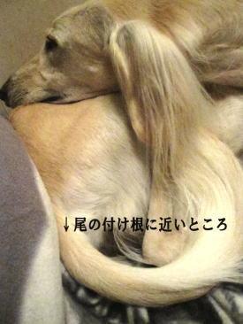 20101022_6.jpg
