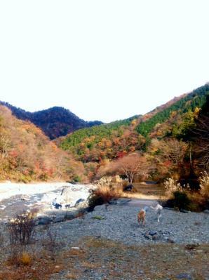 20101124_4.jpg