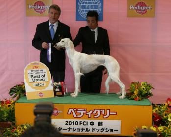Champy(SUP. BISS. JKC.Ch Heart & Soul JP Shawanda / Ow:R.Kushimoto) Chubu FCI International Dog Show BOB!!!