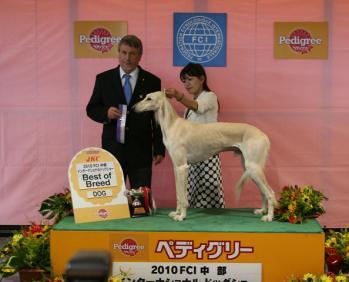 Krauser(JKC.CH Gehela's Ablah Uday ibn Fajr J.A.Y. ) Chubu FCI International Dog Show BOB!!!