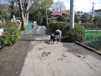 nobunaga_20100421_11.jpg