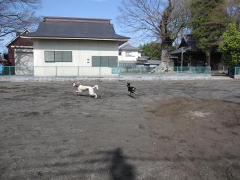 nobunaga_20100421_13.jpg