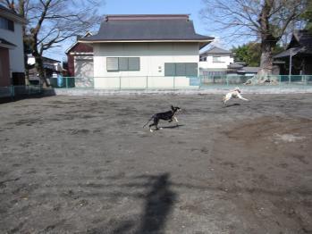 nobunaga_20100421_16.jpg