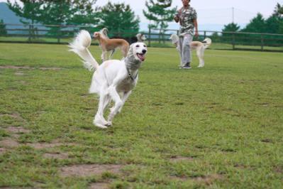 shiga_20100919_17.jpg