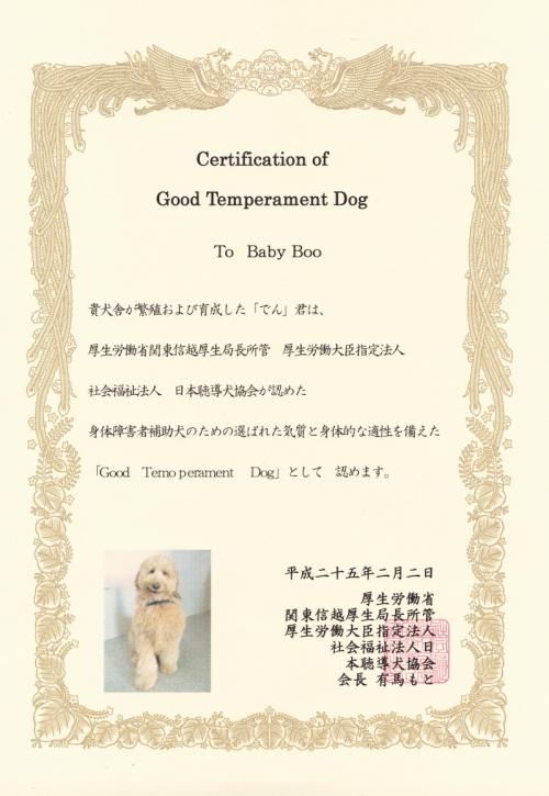 当犬舎のゴールデンドゥードルが身体障害者補助犬の適正を認められました♪