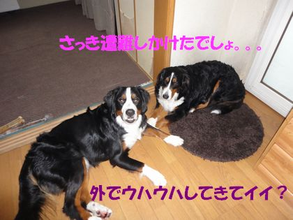 DSC00722.jpg