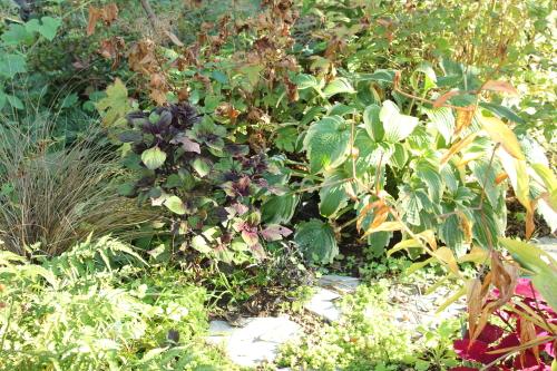 半日陰の庭