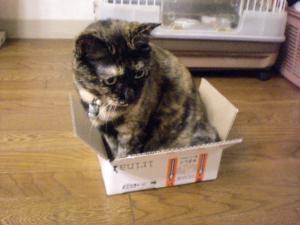 ①箱ビッケ1