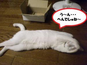 ①箱プリン2