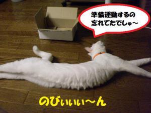 ①箱プリン4