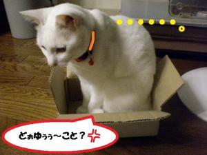 ①箱プリン7