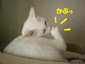 ②プリン3