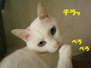 ②プリンぺろ5