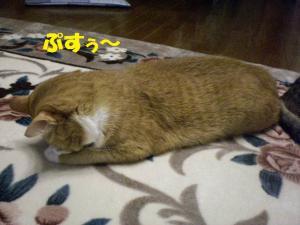 ココごめん寝2
