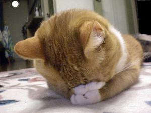ココごめん寝3