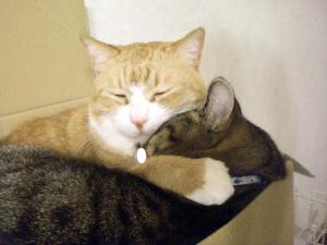 ②箱入り猫