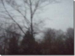 2010 11 09 (2)
