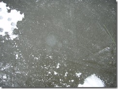 2011 01 05 (18)