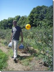 blueberry picking 018