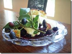 blueberry picking 023