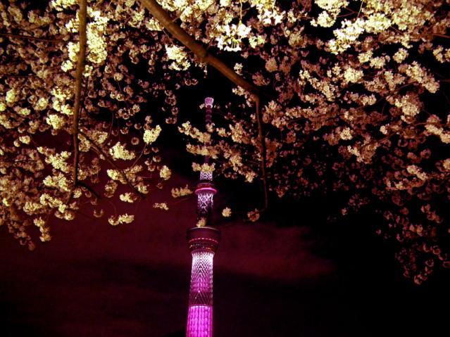 東京スカイツリー 桜ライティングと墨田公園の夜桜