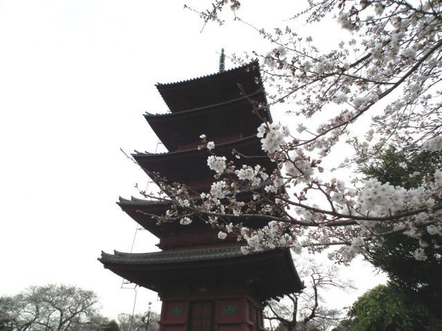 池上本門寺の桜(4)