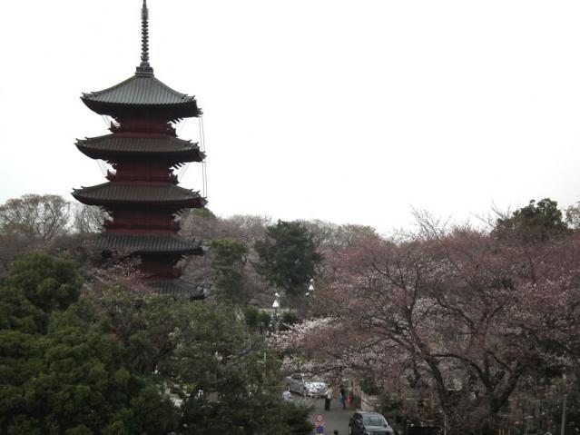 池上本門寺の桜(6)